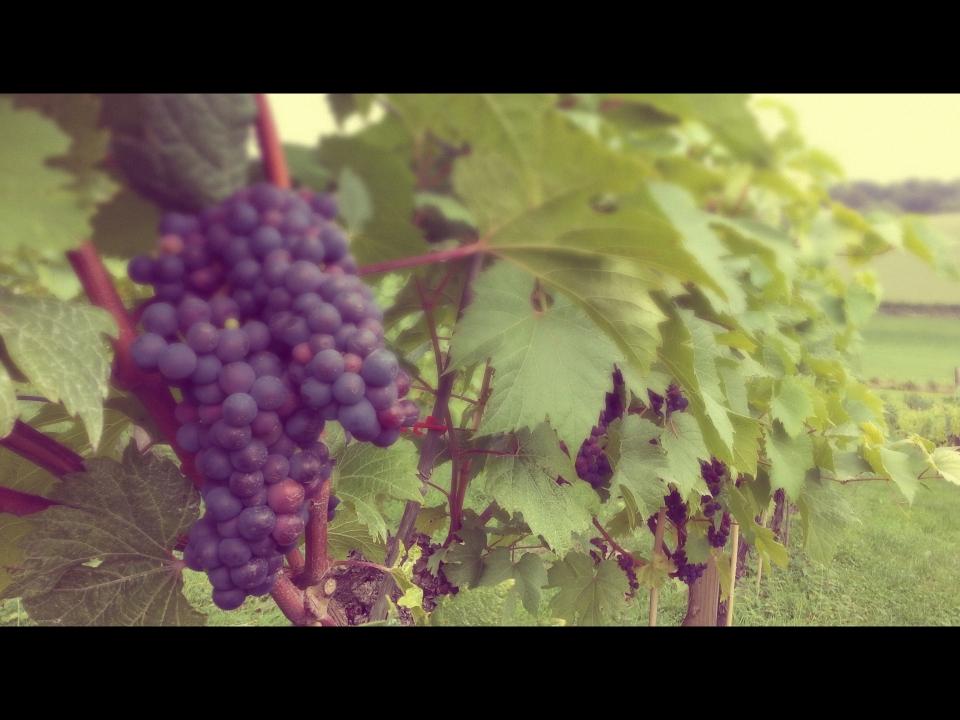 20130921_155937_Melissa_Film